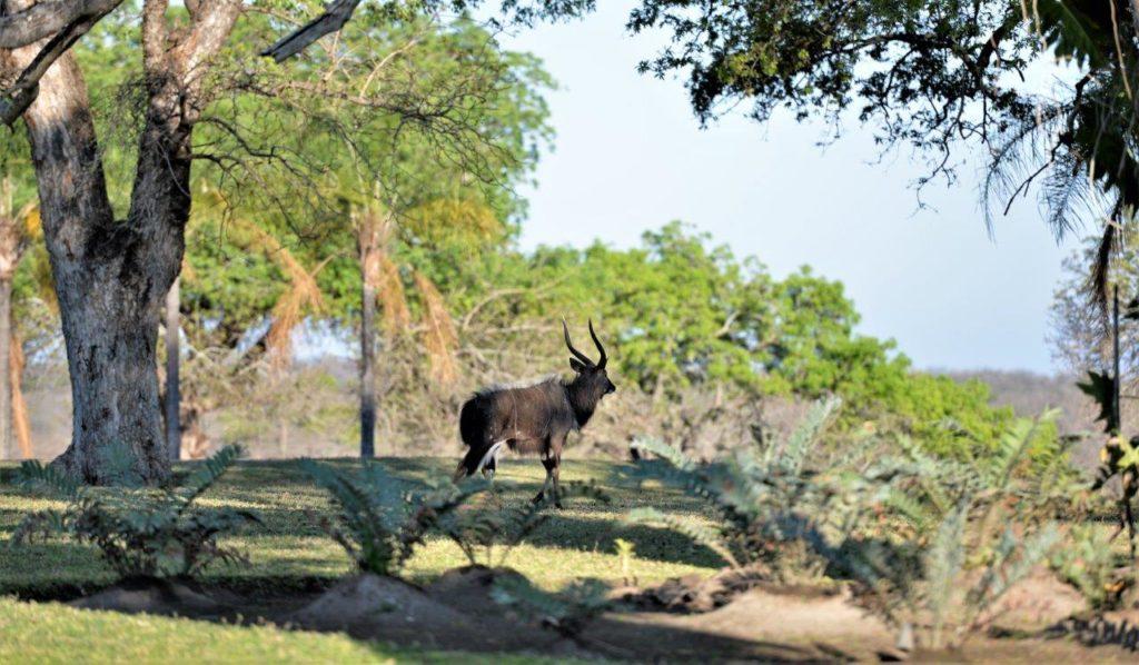 Descubrimiento de la fauna endemica