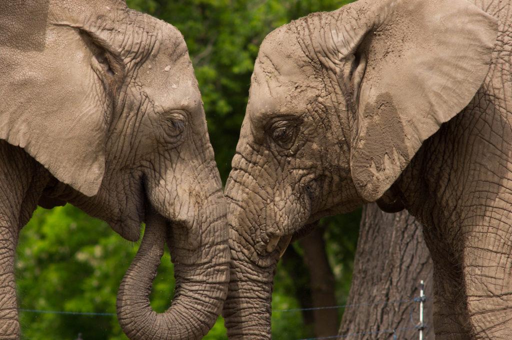 Encuentro con los elefantes
