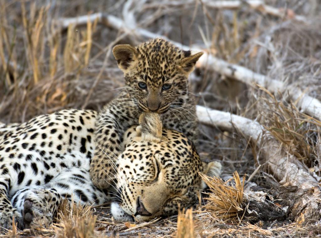 Parc Kruger